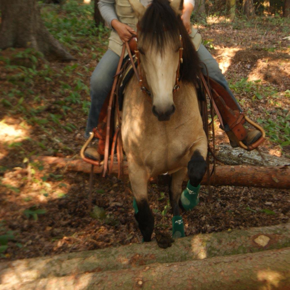 Els-kwatawa Ranch Westernreiten Trail Wanderreiten X-treme X-Cross Kurs