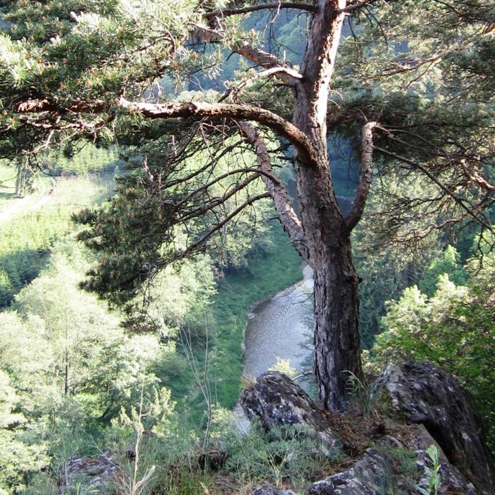 Els-kwatawa Ranch Westernreiten Trail Wanderreiten X-treme X-Cross Wanderritte