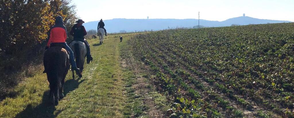 www.els-kwatawa-ranch.at/wp-content/uploads/2019/11/els-kwatawa-ranch_thayatal_westernreiten_wanderreiten_weinviertelritt_1024x410
