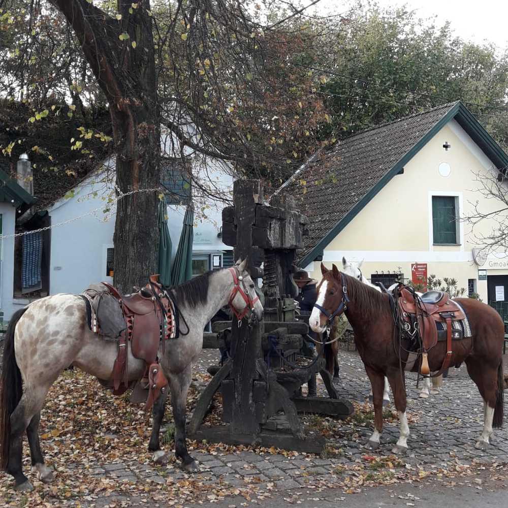 www.els-kwatawa-ranch.at/wp-content/uploads/2020/01/els-kwatawa-ranch_wanderreiten_wanderritt_trailride_weinviertel_20190723_020-1000x1000-1