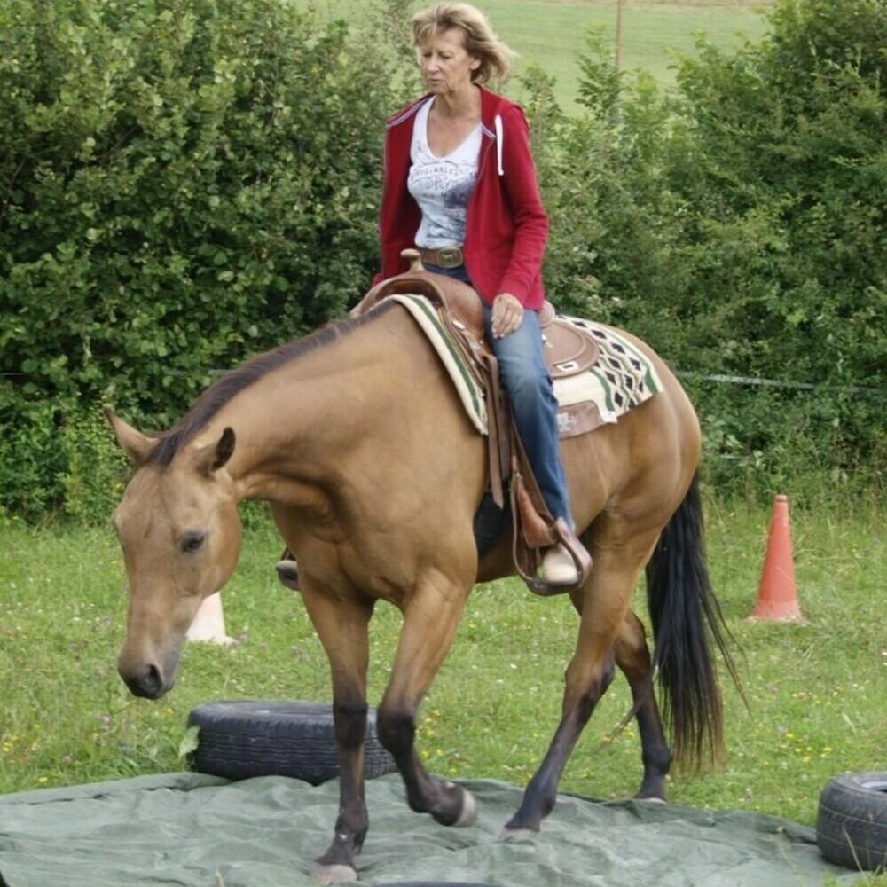 www.els-kwatawa-ranch.at/wp-content/uploads/2020/02/horsility_5