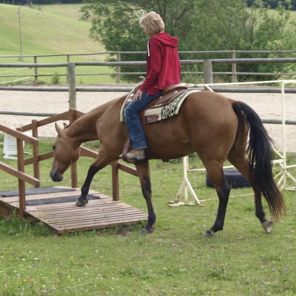 www.els-kwatawa-ranch.at/wp-content/uploads/2020/02/horsility